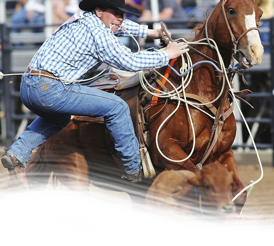 Roping Horses