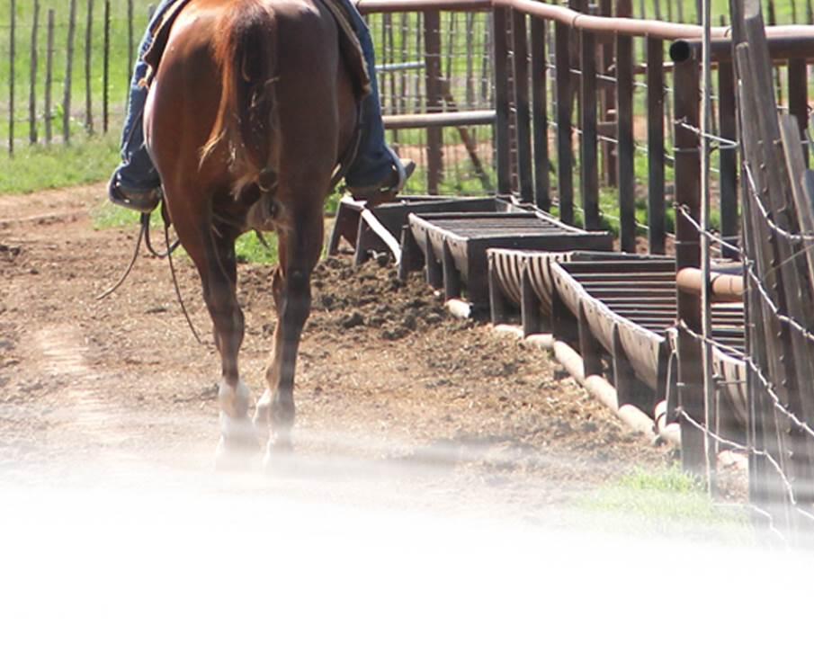 Ranch Versatility Horses