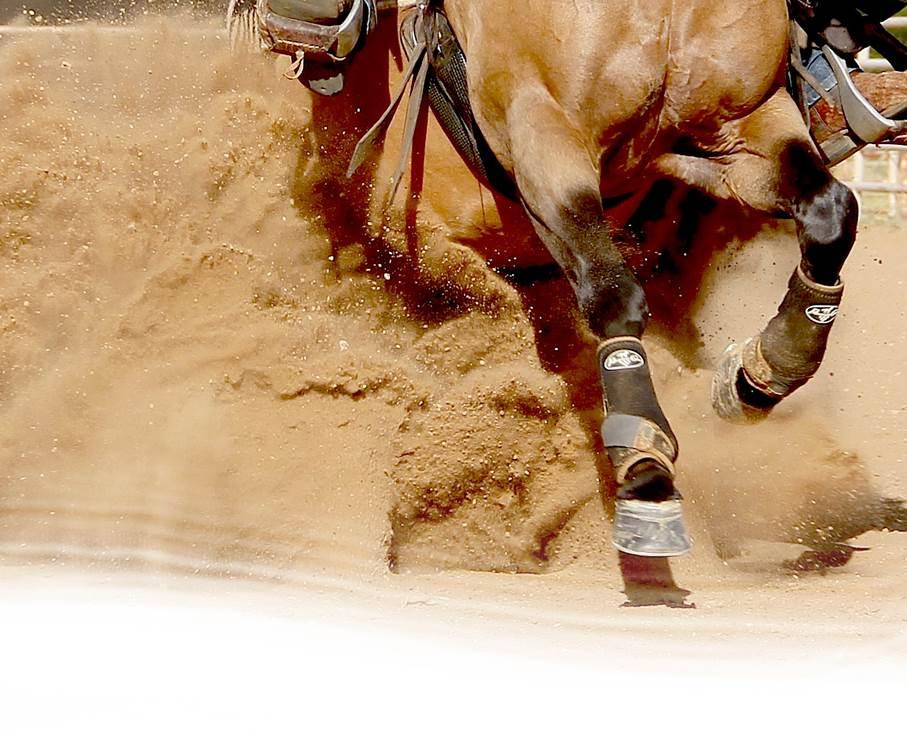 Reining Horses