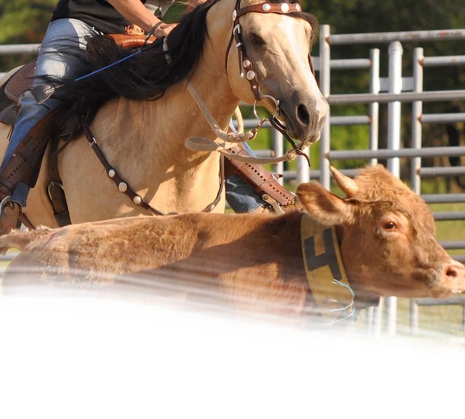 Penning / Sorting Horses