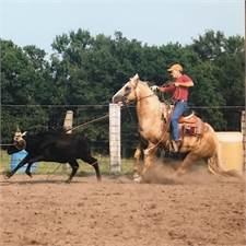 Tracy Goodson Quarter Horses