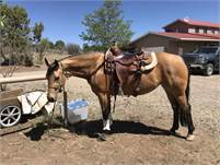 2015 AQHA buckskin filly. Ready to go show in NRCHA, versatility or ranch riding
