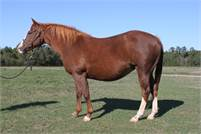 Spots Hot daughter in foal to Sigala Rey.  Comes with a Don't Stopp Believin breeding.