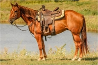 2012 Sorrel Gelding by Duke Joe Jack
