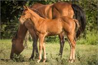 2018 Bay Filly by Makin The News ~ Great versatility prospect