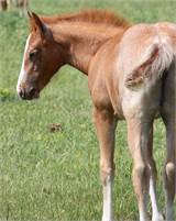 SMART LITTLE LENA DAUGHTER OUT OF ONCE IN A BLU BOON'S FULL SISTER