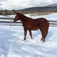Super athletic 2018 filly. Bred the right way!!