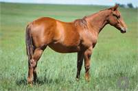 2018 CUTTING BRED FILLY, DUAL REY, SMART LITTLE LENA
