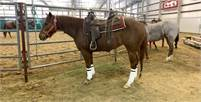 Finished Cutter with NCHA $$-  Kit Kat Sugar by OD of Peptoboonsmal