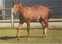 2 YO FILLY, STARLIGHT KAT X CHIC Rx X SMART CHIC OLENA, NRCHA ELIGIBLE