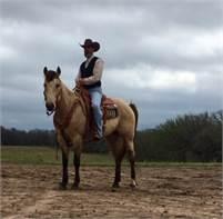 Buckskin Ranch Horse
