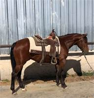 2015 Kit Kat Sugar Gelding out of NCHA Earner