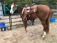 2017 Mare by Gunner On Ice out of a producing mare!