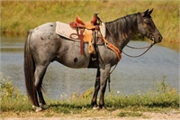 2009 Blue Roan Pony