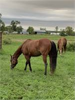 Two Year Old Once In s Blu Boon Filly