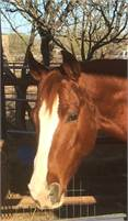 Ranch sorting/cutting mare by Teninas First