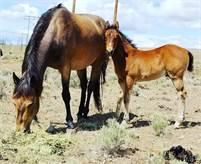 2020 Rope Horse Prospect