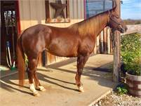 Daughter of Soula Jule Star for sale.