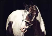 Reining, Ranching and sorting