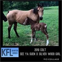 KFL Quarter Horses - 2019 offspring now available - Playgun/Driftwood genetics!