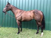 Awesome Potential- Once in a Blu Boon Filly