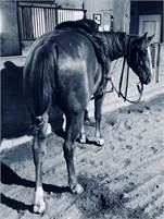 Three Yr Old Boon a Little Mare