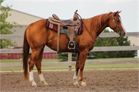 3 Year Old Mare by Highbrow Sweet Ride