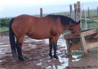 Athletic and pretty mare by Chic Please out of $ earning Reminic daughter.