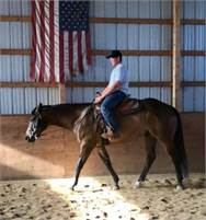 Big, Sturdy, Well Broke 5 Y/O by Winnie's Willy, Triple Registered AQHA/APHA/PtHA