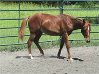 2019 Sorrel colt by Just Playin Smart out of a Freckles Playboy mare