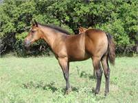 2018 Bay Filly.  NEW Pictures
