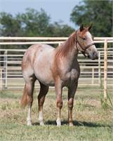 2018 Once In A Blu Boon Filly