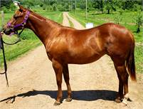 Awesome cow horse prospect