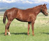 2017 Sorrel Mare – out of a Smart Chic Olena granddaughter x Dual Pep son