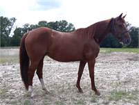2007 Sorrel broodmare (with produce earnings) by Spots Hot
