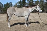 Playgun daughter in foal to Sannman