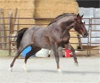 HIGH COST OF METAL (METALLIC CAT x earning daughter of DUAL REY)...Breeding Incentives apply!!
