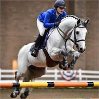 Outstanding Quality Showjumper/Eventer