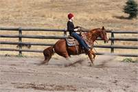 GENTLE AND ATHLETIC GELDING SIRED BY Olena Oak