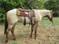 Gorgeous 2017 Foundation-Bred Red Roan Mare