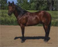 Beautiful Ranch Riding Gelding