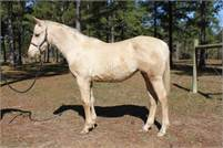 Jesses Topaz Filly