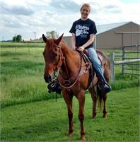 Experienced  Cutting, Working with Cattle & Trail Horse