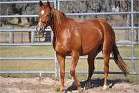 Reys Dual Badger 2017 sorrel filly out of daughter of Smart Aristocrat