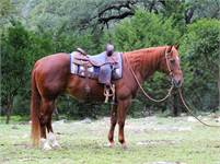 SOLD        BRIGABOYS WILD BOB 2002 AQHA gelding *Cutting*Ranch Versatility*SHOT Broke, Solid,