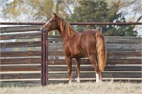 2016 Bet Hesa Cat daughter x earning & producing mare
