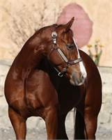 2012 SORREL QUARTER HORSE MARE