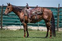4 Year old NCHA Earner by Third Cutting
