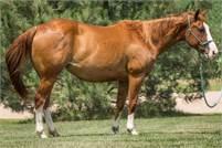 Elans Playboy daughter in foal to Metallic Chance ~ Own son of Metallic Cat