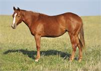 BEAUTIFUL 2017 DUAL REY FILLY OUT OF MONEY EARNING MARE!